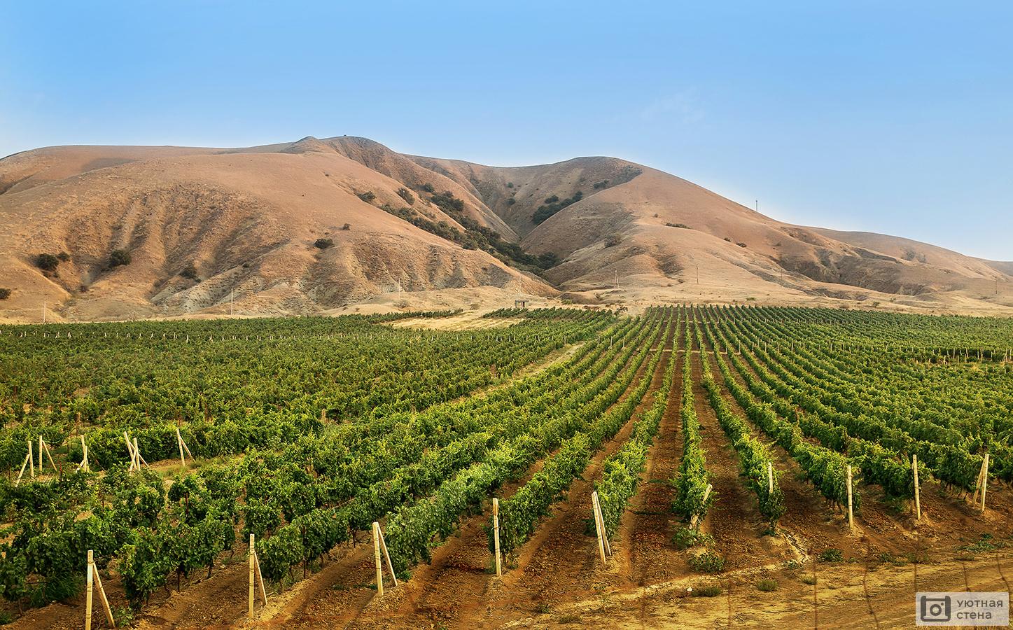 Дубай виноградник купить продажа дома в дубае