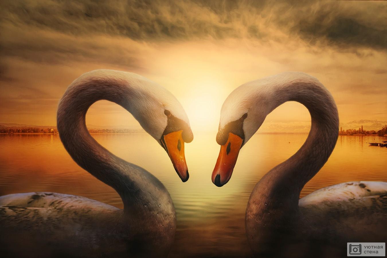 Обои лебедь, шар, логотип. Минимализм foto 12