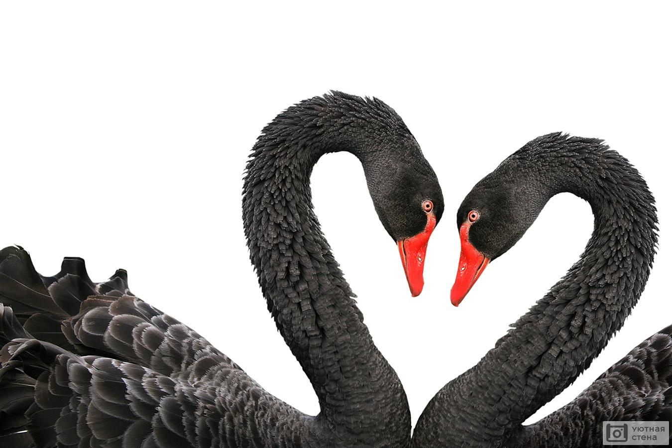 Обои лебедь, шар, логотип. Минимализм foto 19