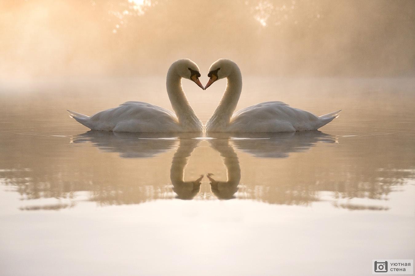 Обои лебедь, шар, логотип. Минимализм foto 16